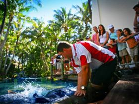 The Living Reef on Daydream Island - Gold Coast Attractions