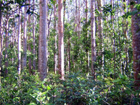 Cathu State Forest - Gold Coast Attractions
