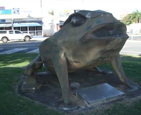 Big Cane Toad - Gold Coast Attractions