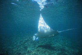 Manta Ray Bay Dive Site - Gold Coast Attractions