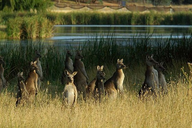 Canberra  The National Capital  Full Day Private Tour  Departs from Sydney - Gold Coast Attractions