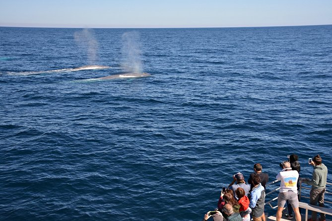 Blue Whale Perth Canyon Expedition - Gold Coast Attractions