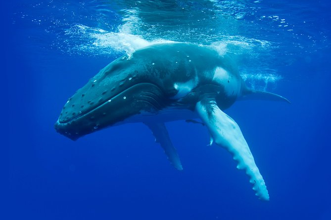 Whale-Watching Cruise from Dunsborough - Gold Coast Attractions
