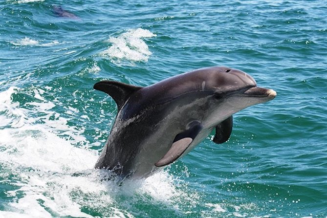 Half-Day Mandurah Canals  Dolphin Watch Tour - Gold Coast Attractions