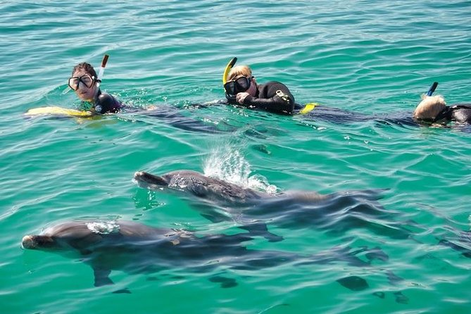 Swim with Dolphins Day Trip from Perth - Gold Coast Attractions