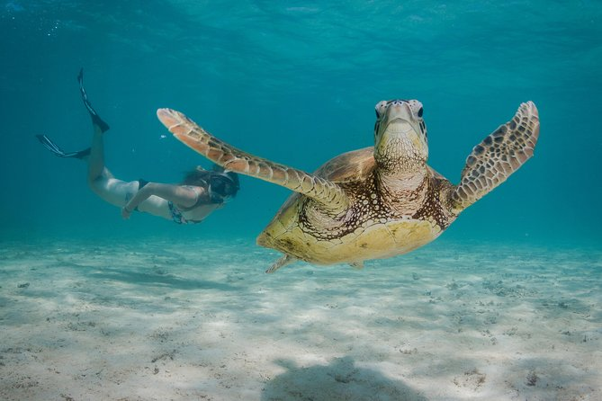 Marine Life Discovery  Lagoon Snorkeling Tour from Exmouth - Gold Coast Attractions