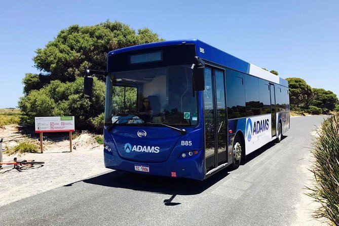 Rottnest Bayseeker Bus Tour from Hillarys Boat Harbour - Gold Coast Attractions